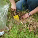 Collecting a soil and root sample